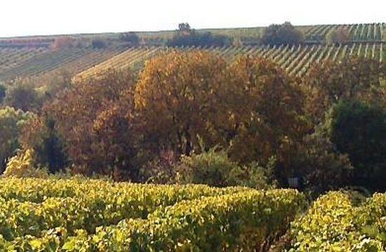 Weinprobe - Lässige Weine für Spätsommer und Herbst