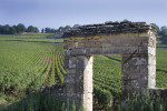 """Weinprobe der Lenau Weinhandlung: Burgund """"ganz einfach"""" 2014"""