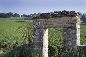 """Read more about the article Burgund """"ganz einfach"""" –  Feine Eleganz aus Chardonnay und Pinot Noir"""