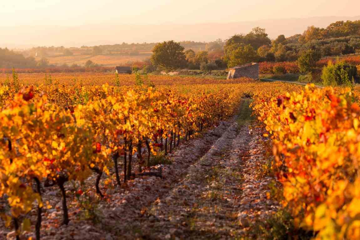 Weinberge an der Côtes-du-Rhône