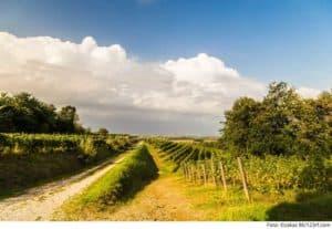 Read more about the article Naturwein: Weinwunder oder Naturkatastrophe?