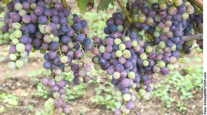 Weinprobe: Feine Bordeaux aus St Emilion und Umgebung