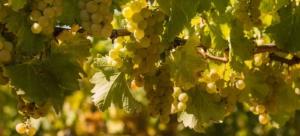 Read more about the article Wein über den Dächern vom Nizza