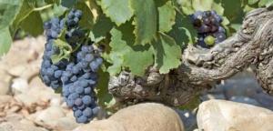 Read more about the article Landwein, Côtes-du-Rhône und Châteauneuf-du-Pape