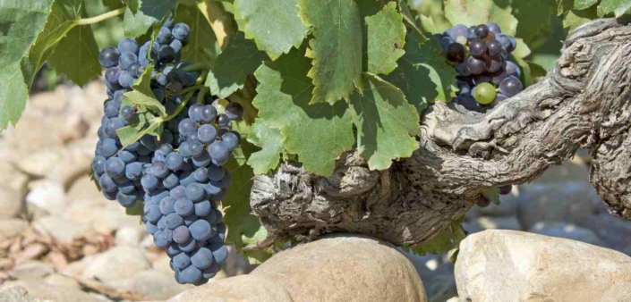 Weinprobe am 12. Oktober