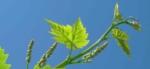 Weinprobe am 12.4.19 - Ab in den Frühling